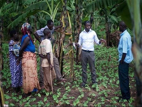 Farmer field main text