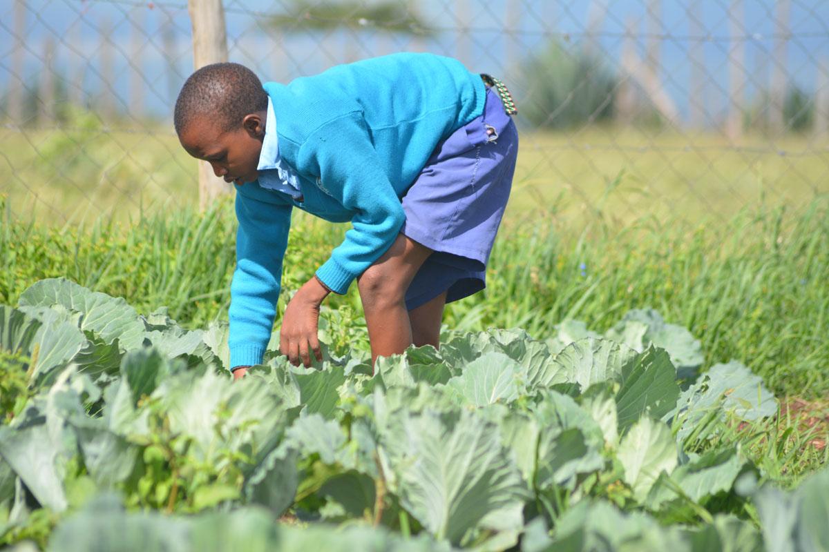 AAH Kenya schools agribusiness